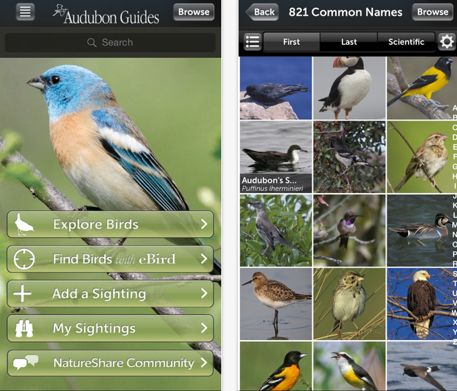 33 Outdoor Apps to Get Kids into Nature Audobon Birds