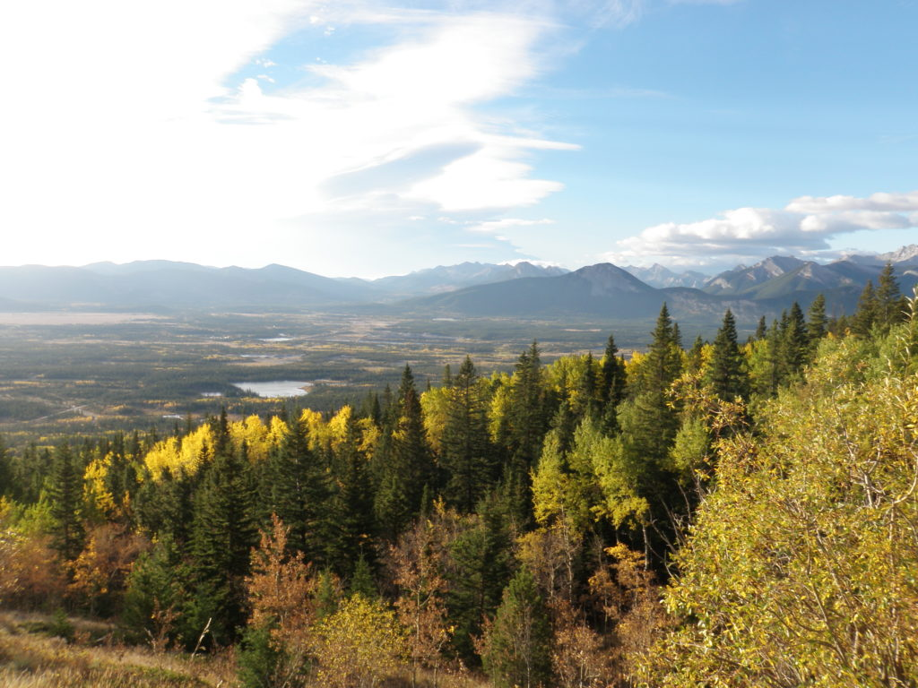 A Good Spot to Search for Wildlife near Yamnuska, Alberta